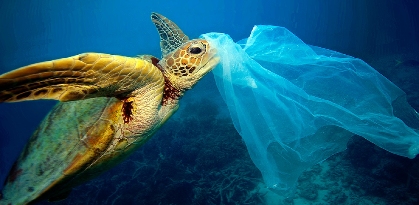 July 3 | International Day Without Plastic Bags